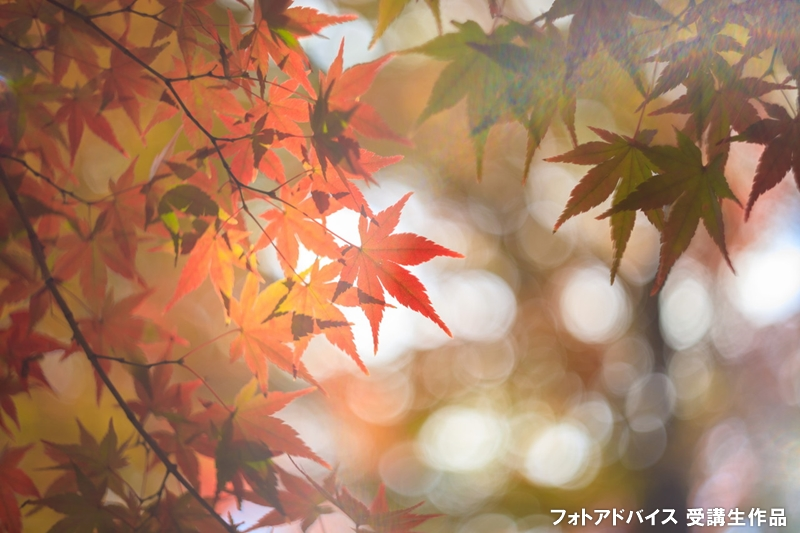 背景を玉ボケで撮った紅葉写真