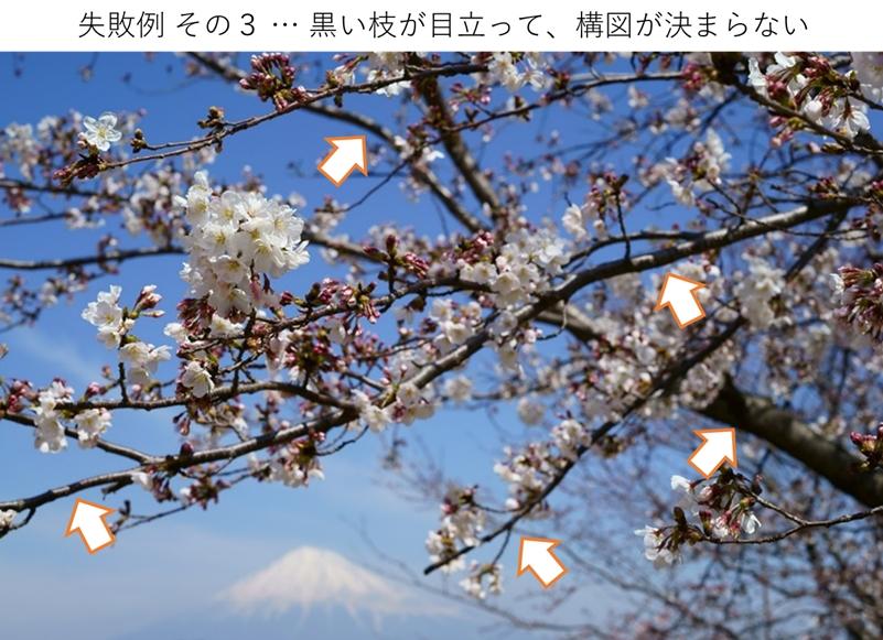 桜の枝ぶりが目立つイマイチ写真