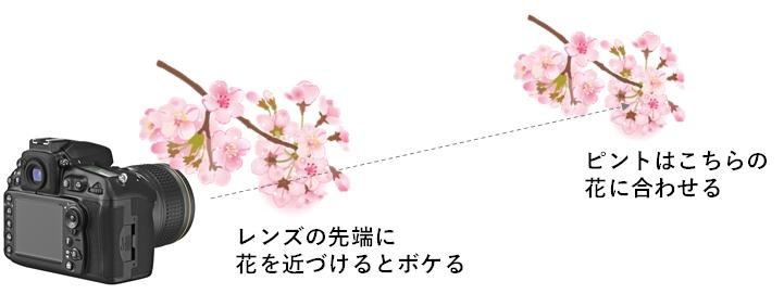桜フィルターの撮り方レンズと桜の距離のイラスト