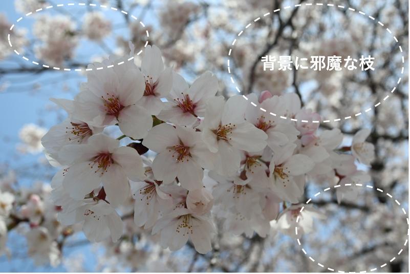 作例 花のアップ、背景に枝が入ってゴチャゴチャとスッキリの比較