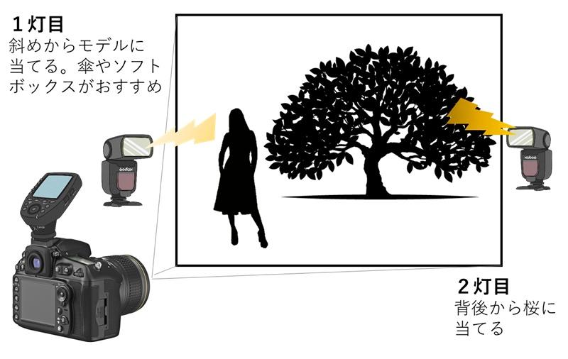 桜ポートレート作例 図解説