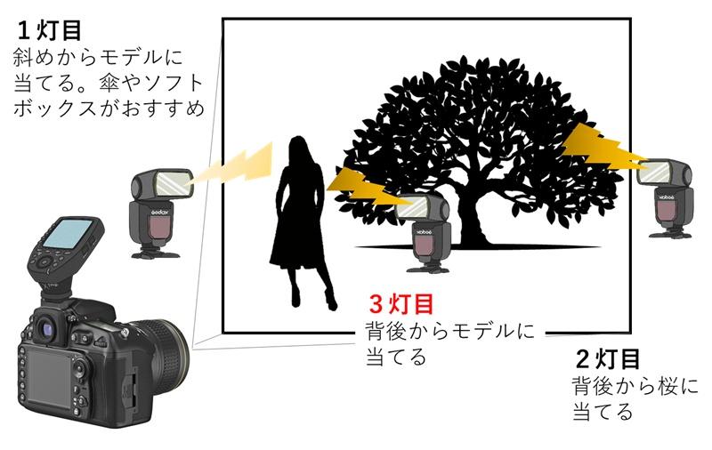 桜ポートレート作例 リムライトの図解