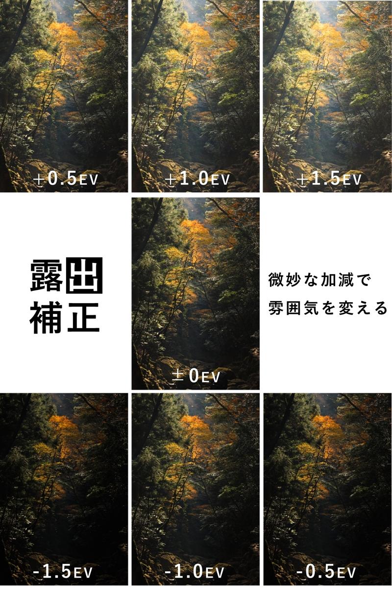 露出補正を細かに行った紅葉の写真