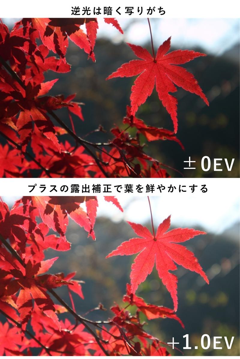 逆光で黒く沈んだ紅葉の写真とプラス露出補正で明るくなった紅葉の写真