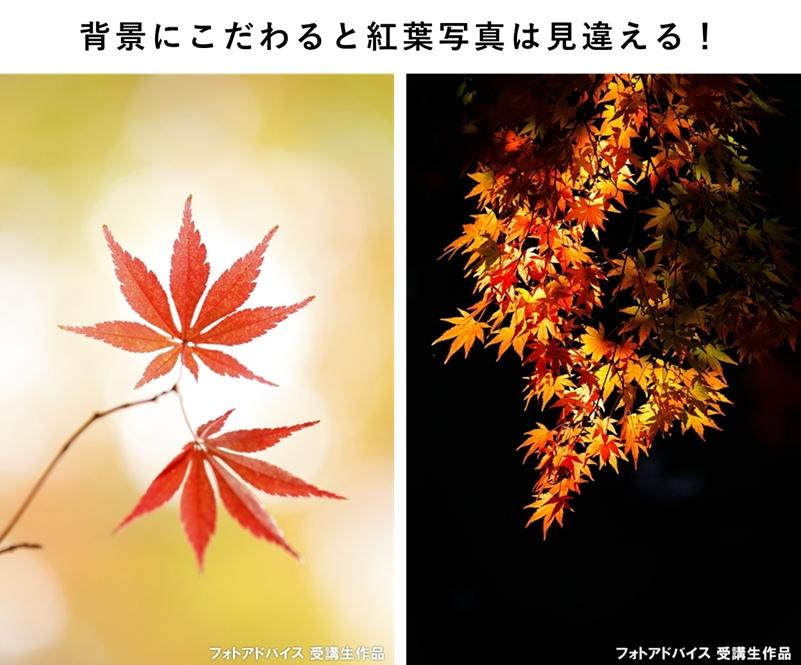 背景を変えた紅葉の写真比較
