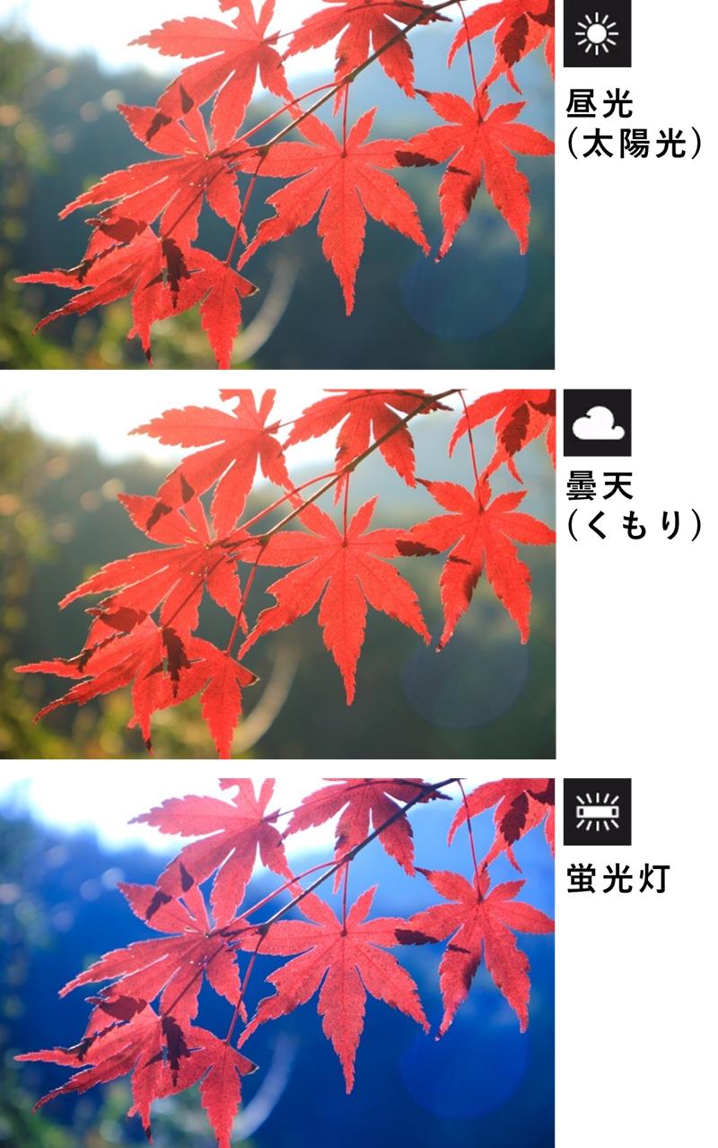 ホワイトバランス 太陽光、曇天、蛍光灯で雰囲気を変えた 紅葉写真