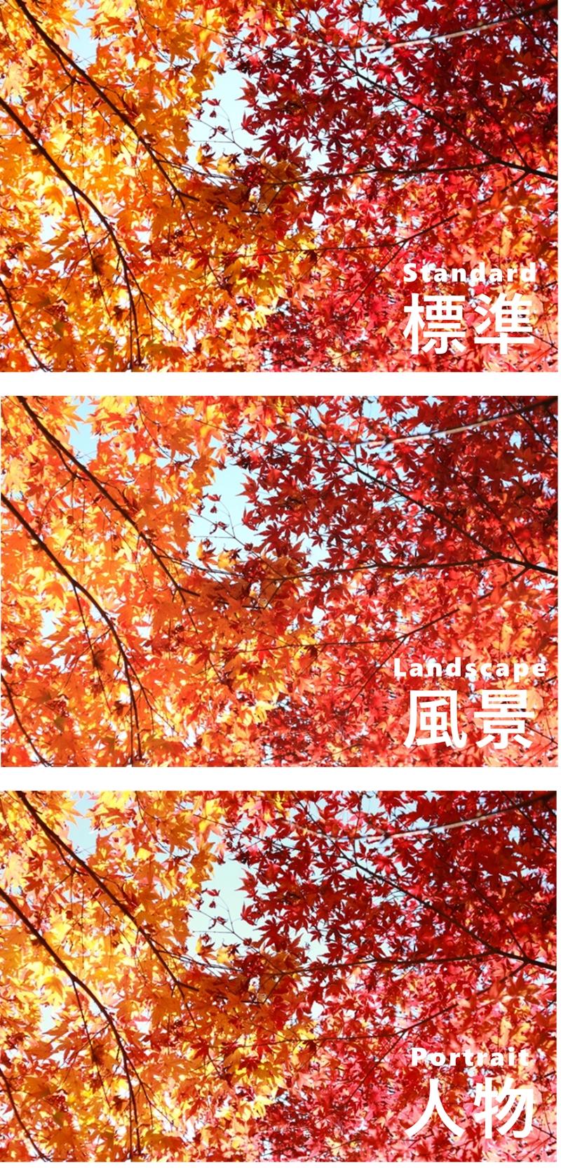 ピクチャースタイル 標準 風景 ポートレートの紅葉写真比較