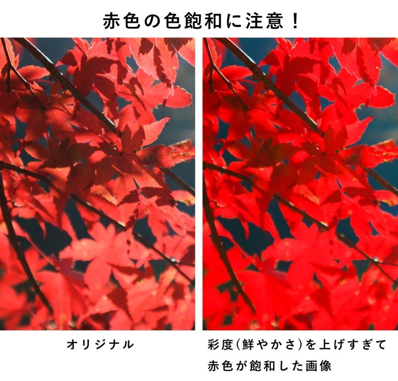 色飽和を起こした紅葉写真