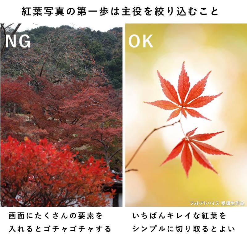 紅葉写真の第一歩は主役をシンプルに切り取ること