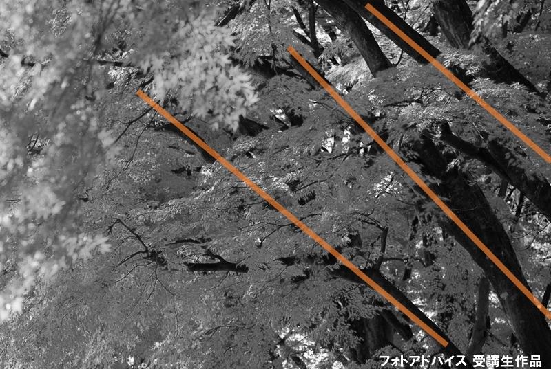 枝を斜めに配置した紅葉写真