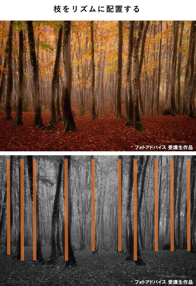 枝をリズムで配置した紅葉写真