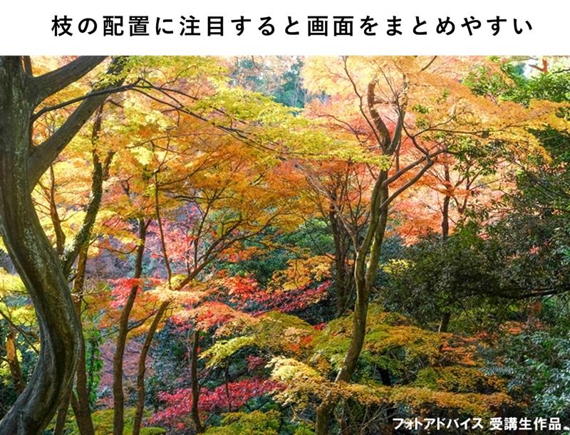 木の枝をバランスよく配置した紅葉写真