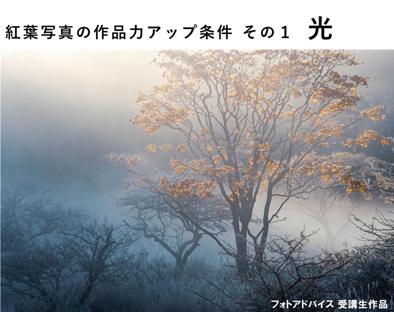 紅葉写真の作品力アップ条件 光