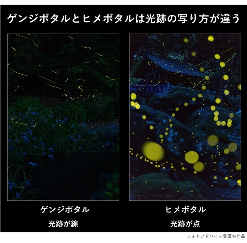 ゲンジボタルとヒメボタルは光跡の写り方が違う