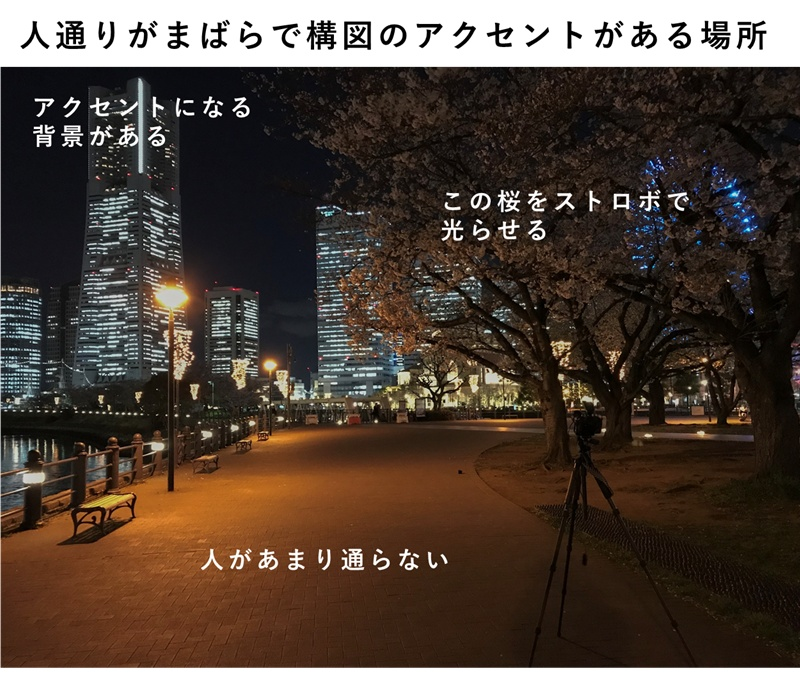 夜桜のストロボ撮影に向いた場所