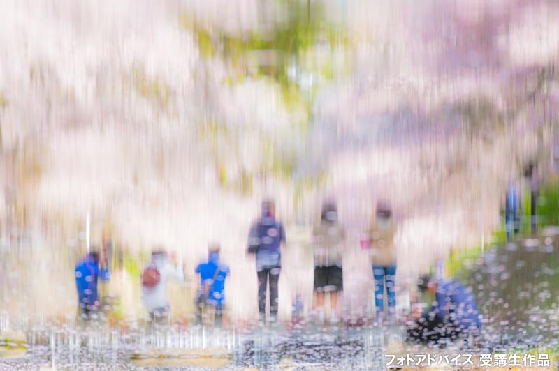 水面の映り込み(リフレクション)の桜写真