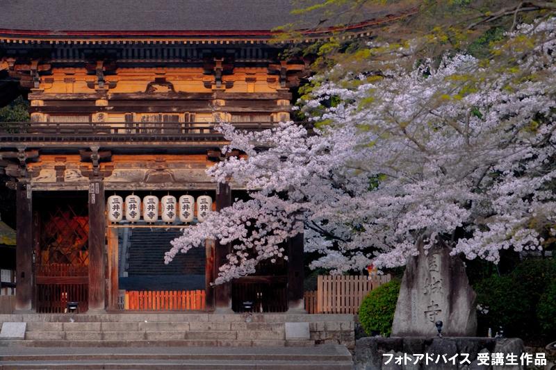 望遠レンズで建物と桜を撮った写真