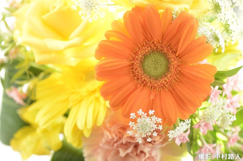 透過光を追加して花を拡大