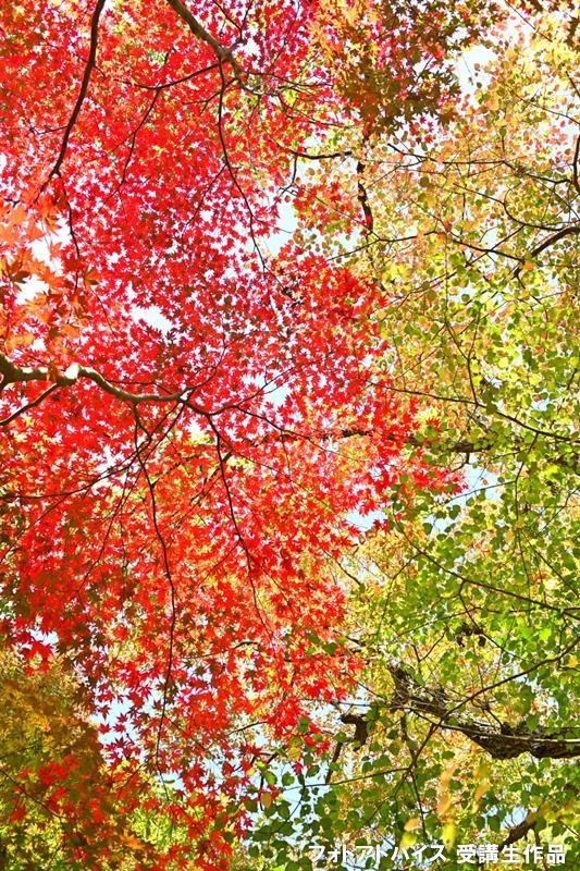 色の配色に気を配った紅葉写真