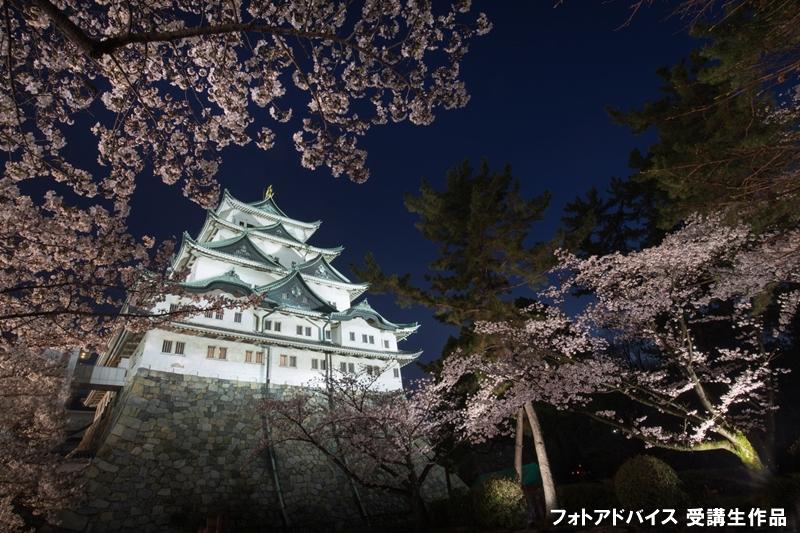 桜のトンネル越しに城を撮った写真