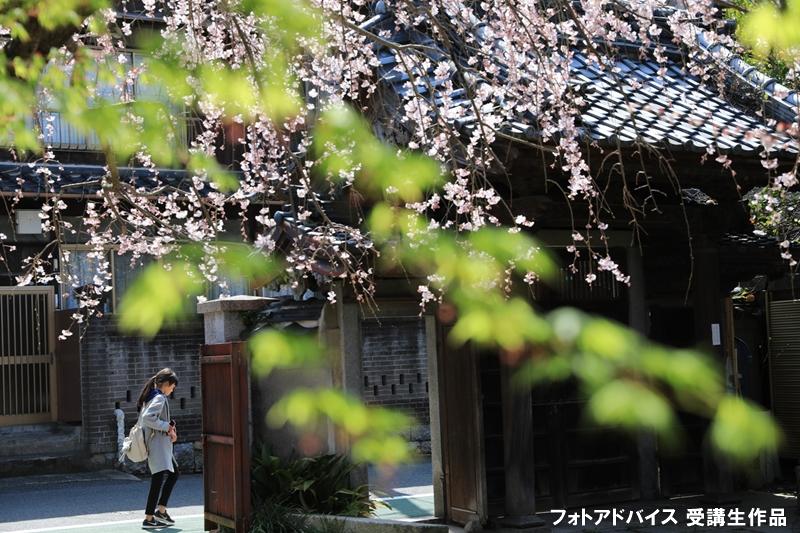 桜の街角スナップ写真