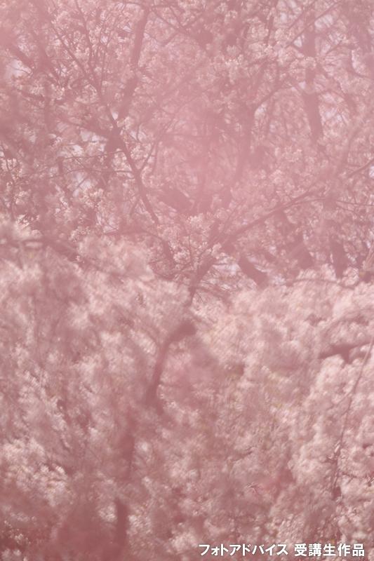 桜フィルターの写真その2