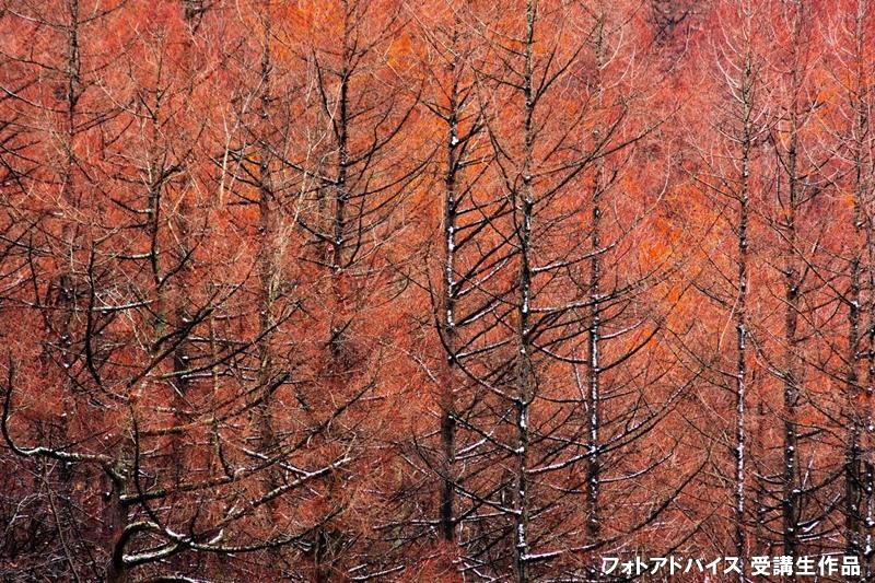 望遠レンズで遠くの紅葉を切り取った紅葉写真