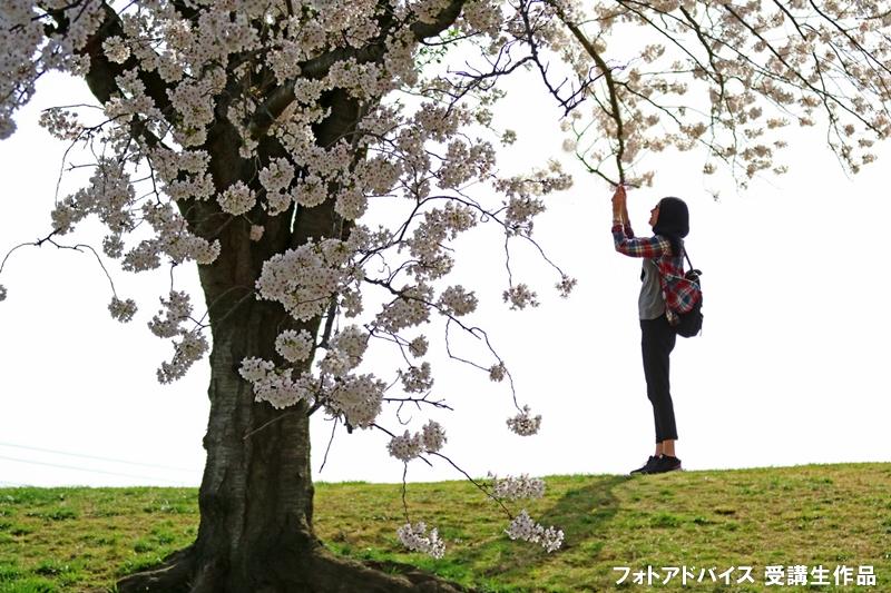 桜のポートレートスナップ写真