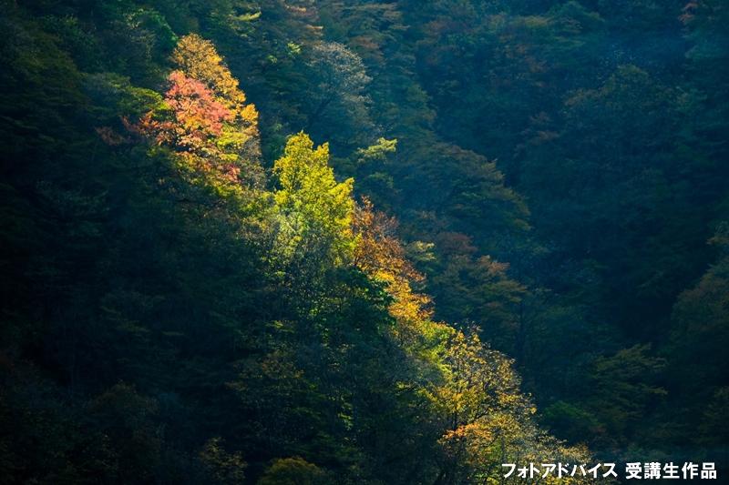 スポット光で撮影した紅葉写真