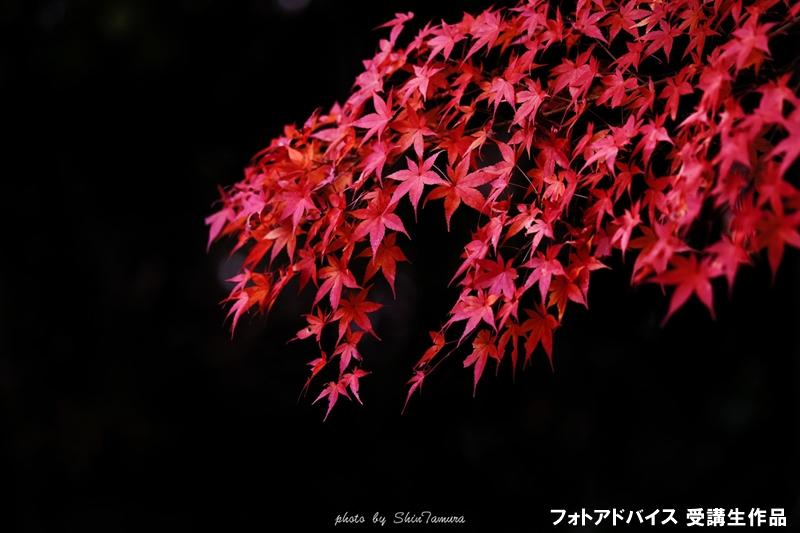 影で背景を黒くした紅葉写真