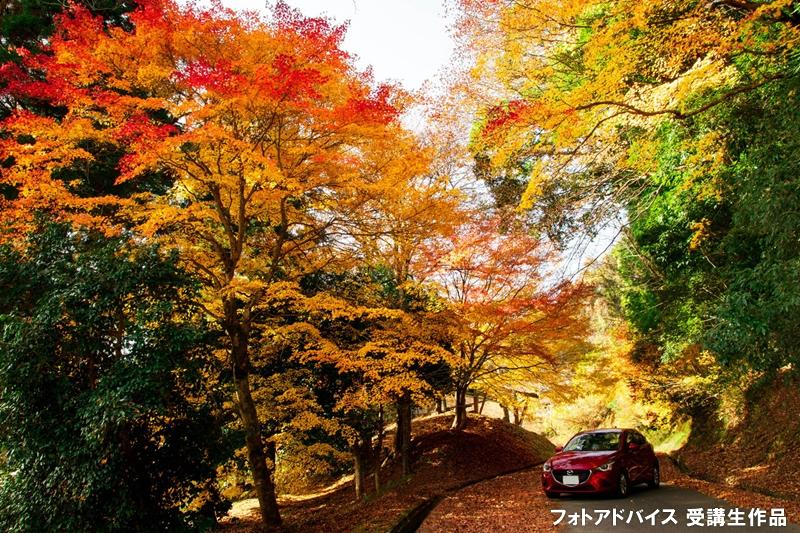 車と紅葉の写真