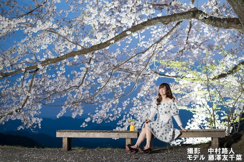 夜桜のストロボ撮影で夜桜ポートレート