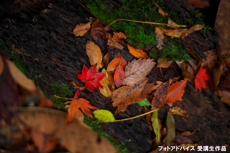 雨で濡れた落ち葉の紅葉写真