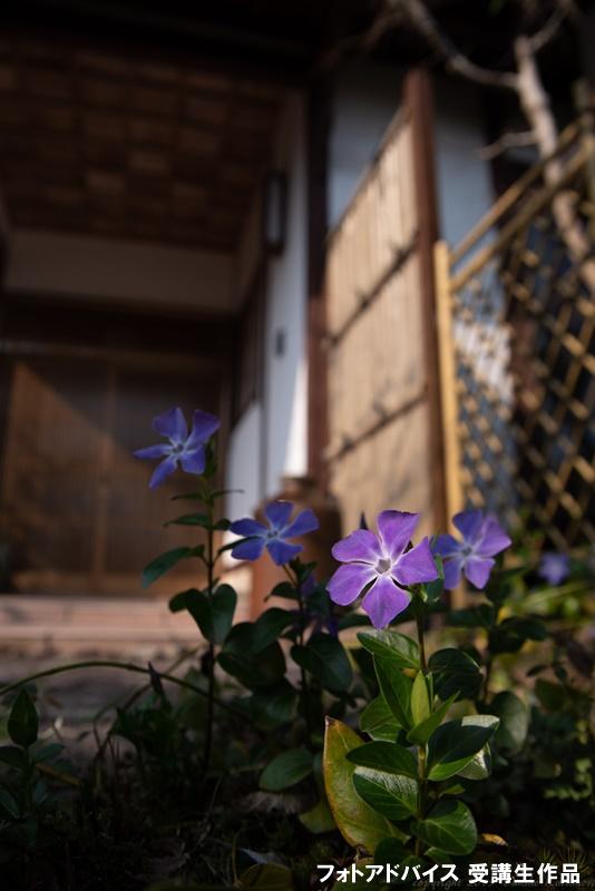 広角レンズでローアングル撮影 花を撮った作品1