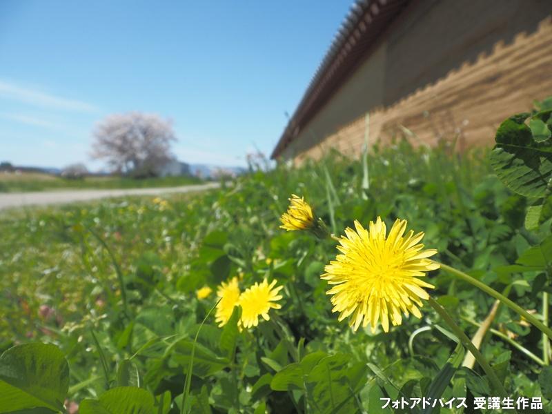 広角レンズでローアングル撮影 花を撮った作品2